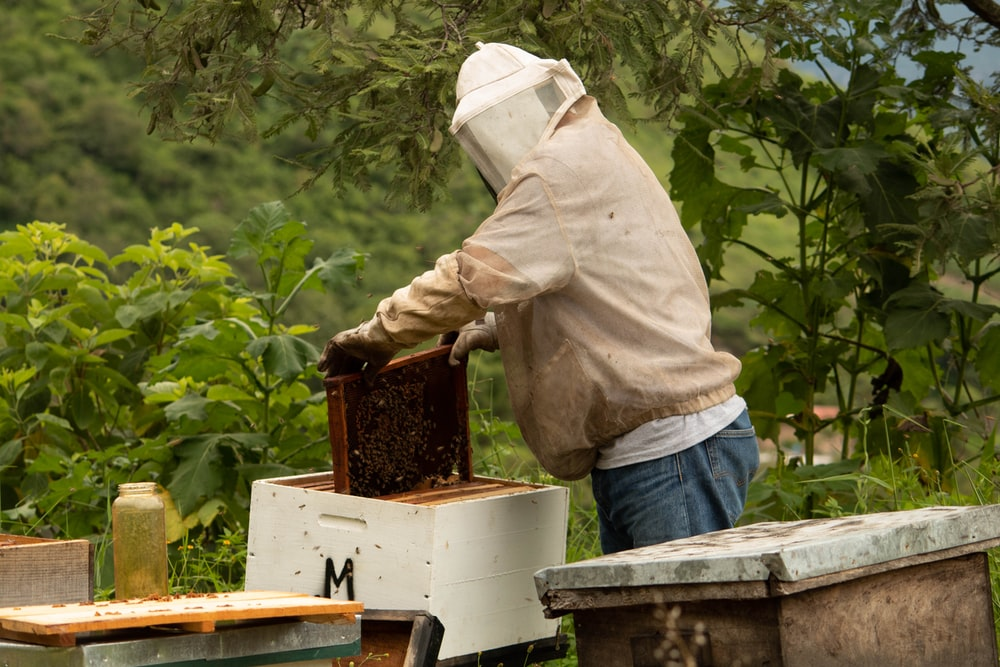 person holding honey comb during daytime