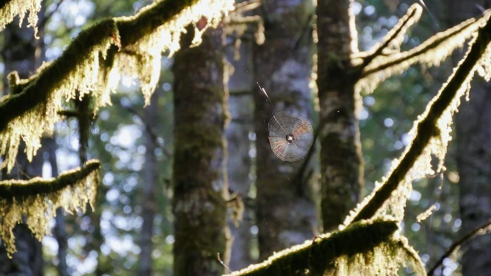 photo of moist branch