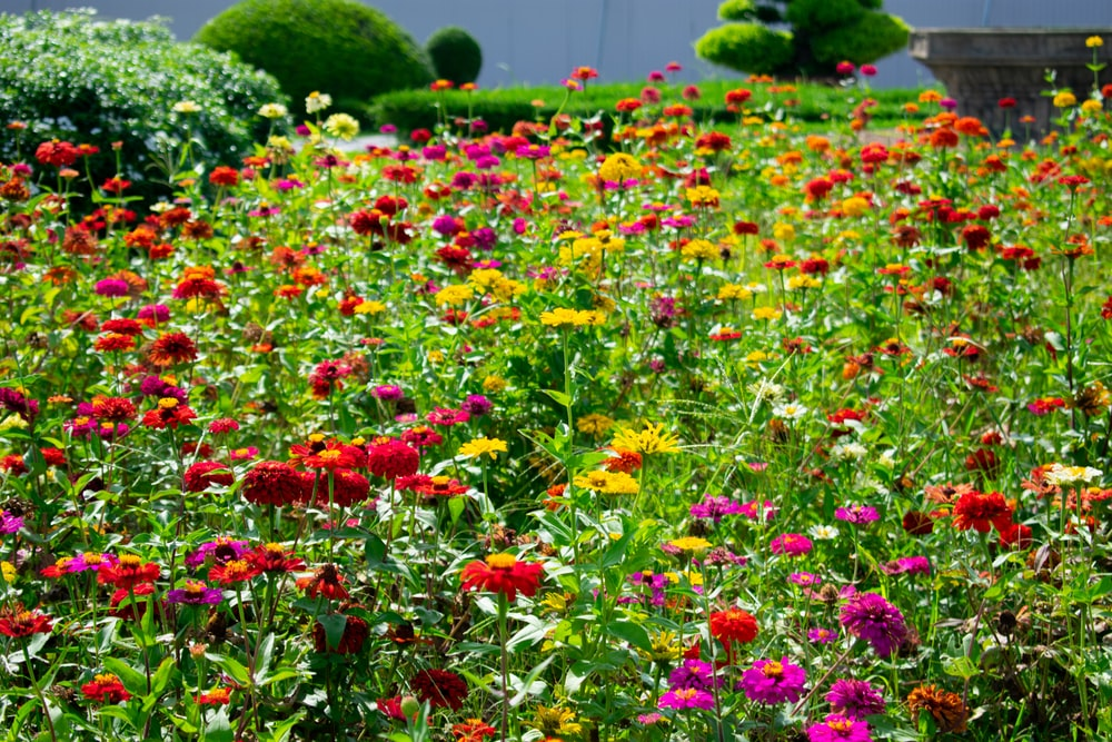 photo of red and yellow meadow flowers