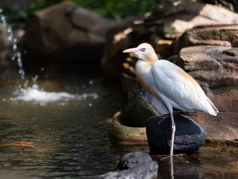 white bird on water