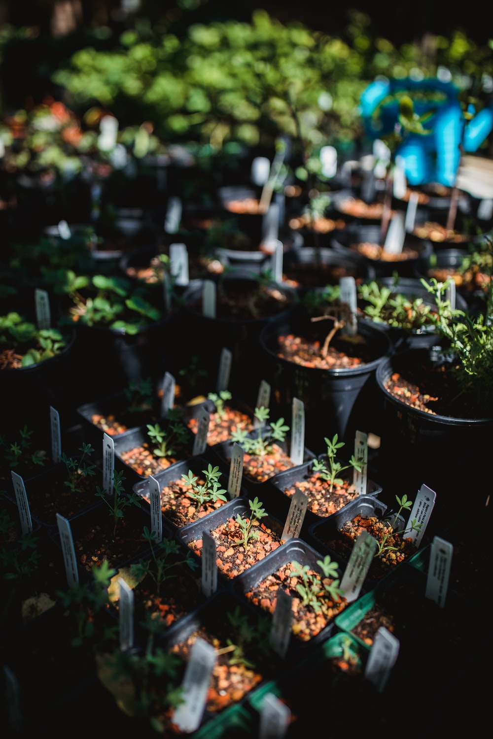 potted green leafed plants