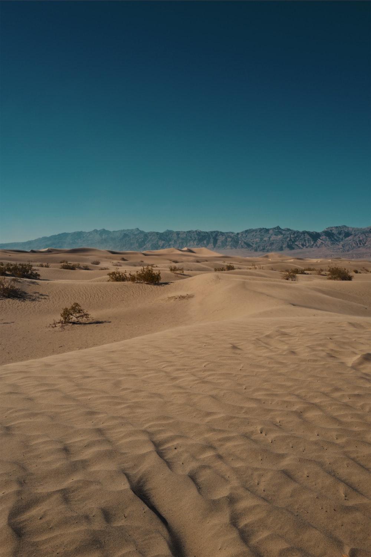 close-up of desert