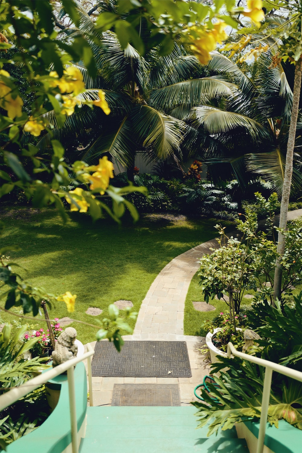 empty walkway surrounded with plants during daytime