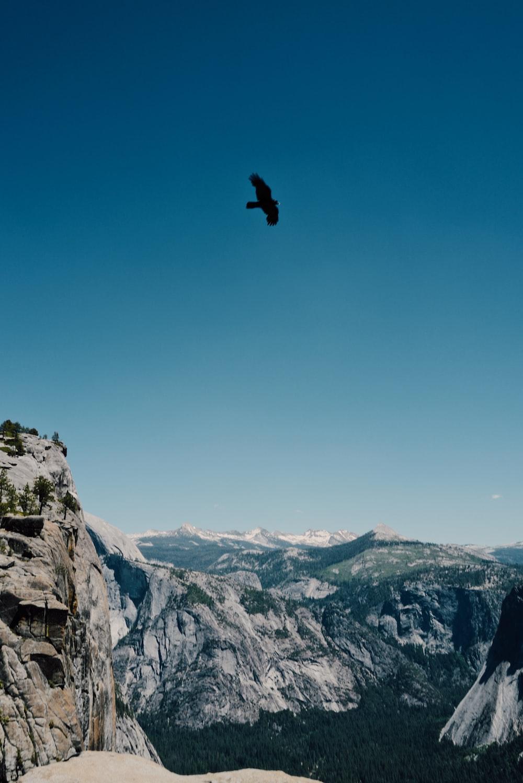 silhouette of bird midair scenery