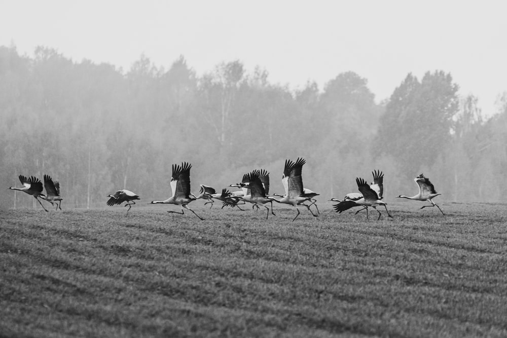 grayscale photography of flying birds