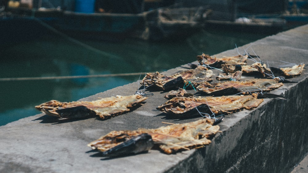 dried fish on concrete near body of water