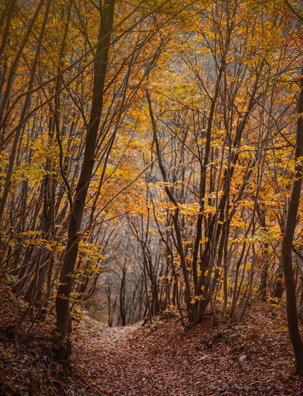 brown-leafed trees