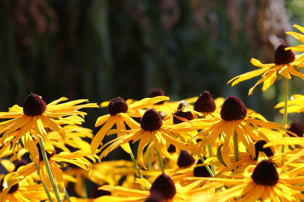 selective focus photography of yellow flowers during daytime