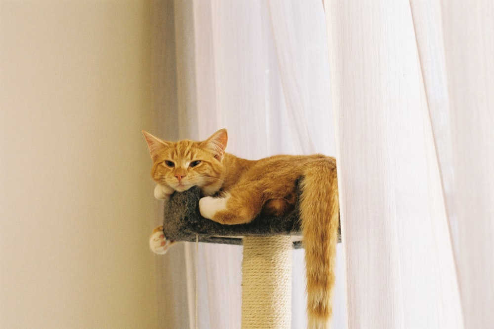 orange tabby cat lying on cat tree