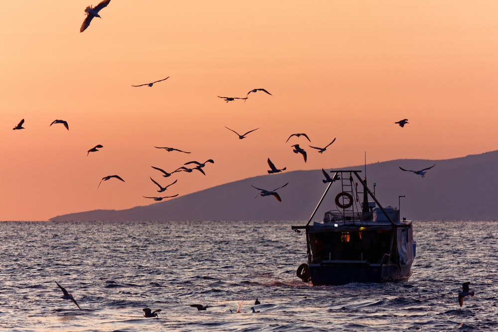 bird on mid air above boat on sea during sunrise