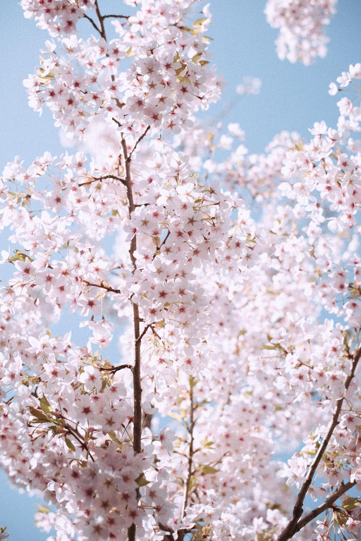 white flowers during daytime photo