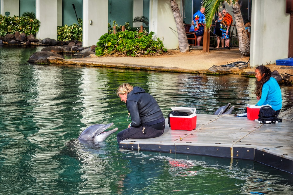 woman sitting beside grey dolphin during daytime