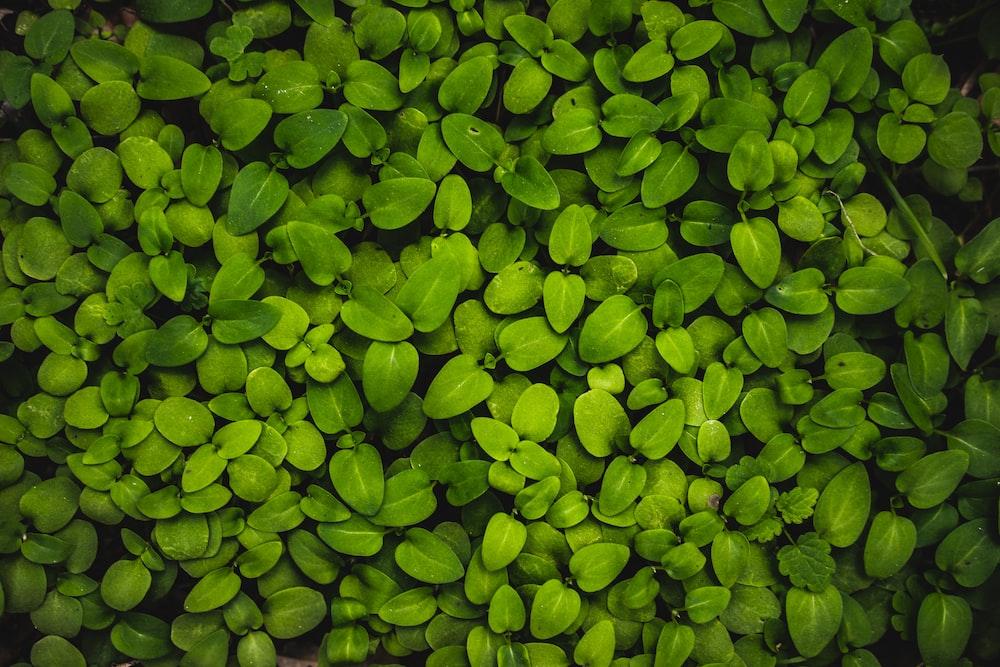 macro photography of green leaf plants