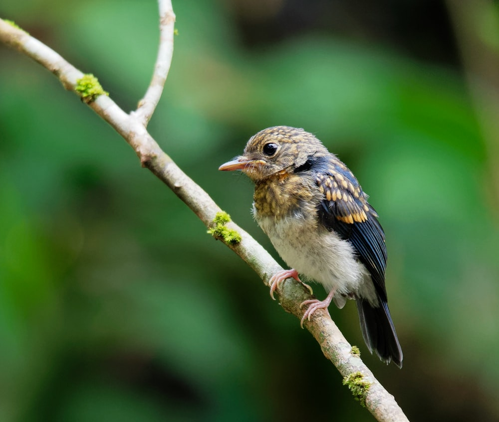 brown and black bird perching on branch