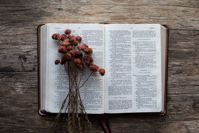 brown flower and book jesus zoom background