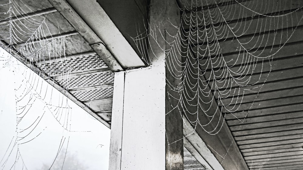 grayscale photo of web