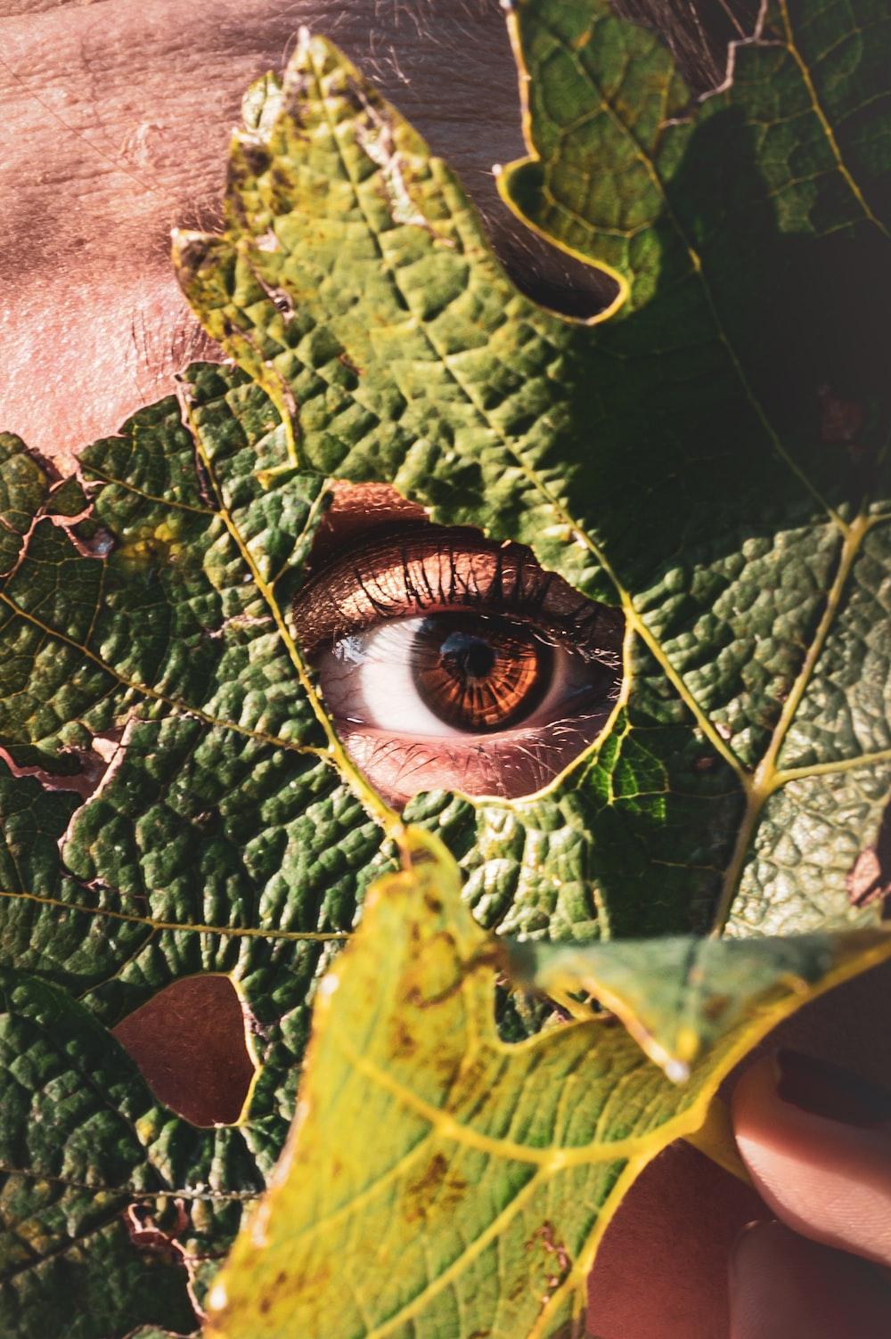 green leaf behind of person eye