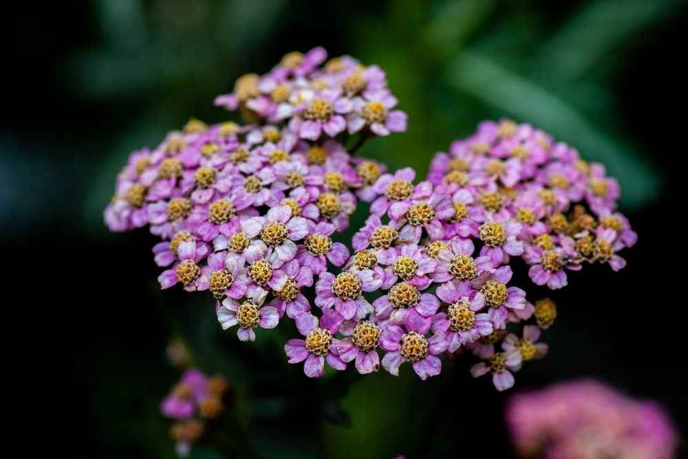 selective focus photography of blooming purple flowers