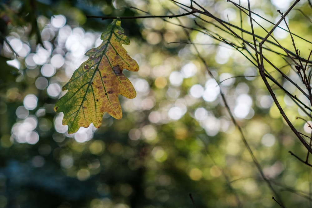 photo of green and yellow leaf