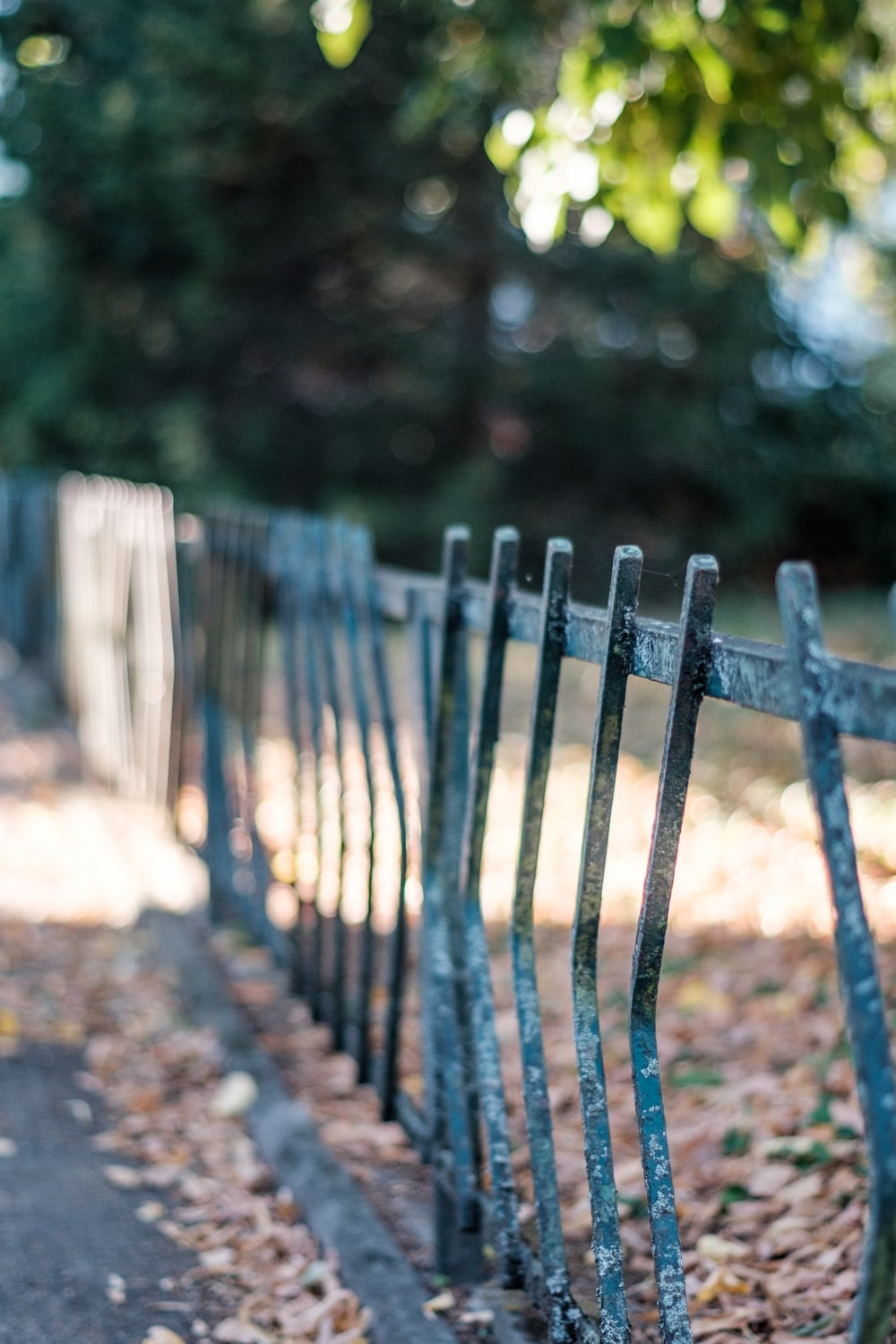 selective focus photography of metal fence under tree