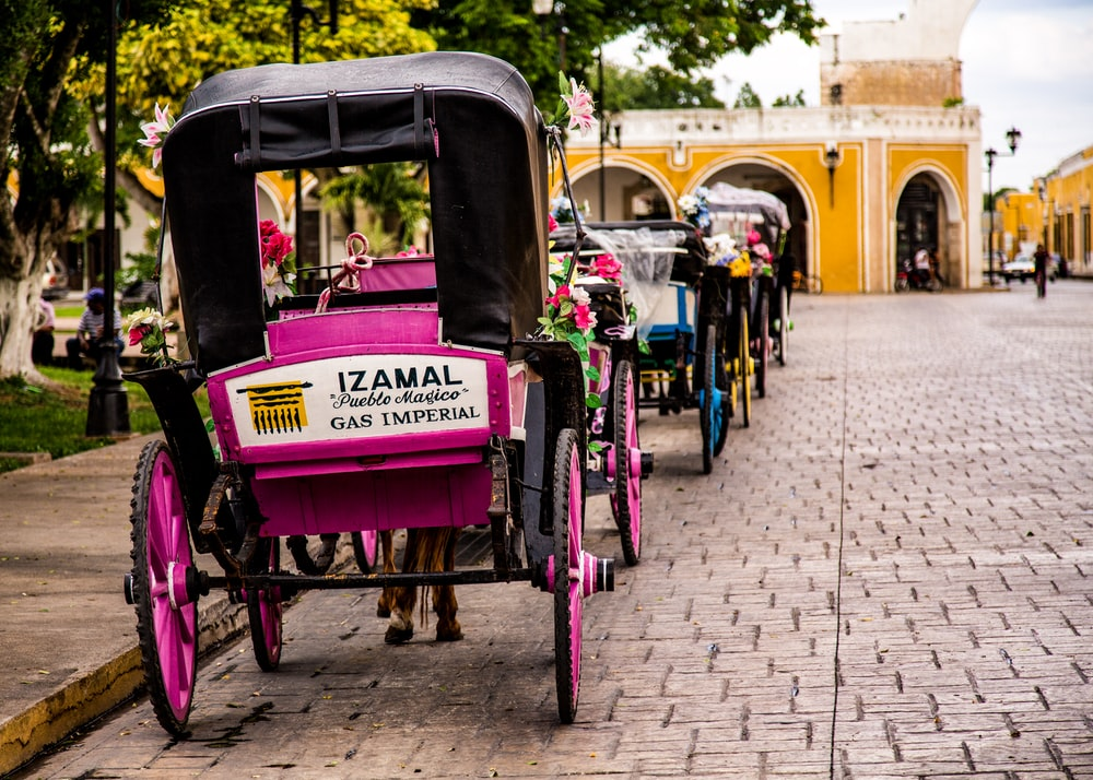 horse carriages on road side near park