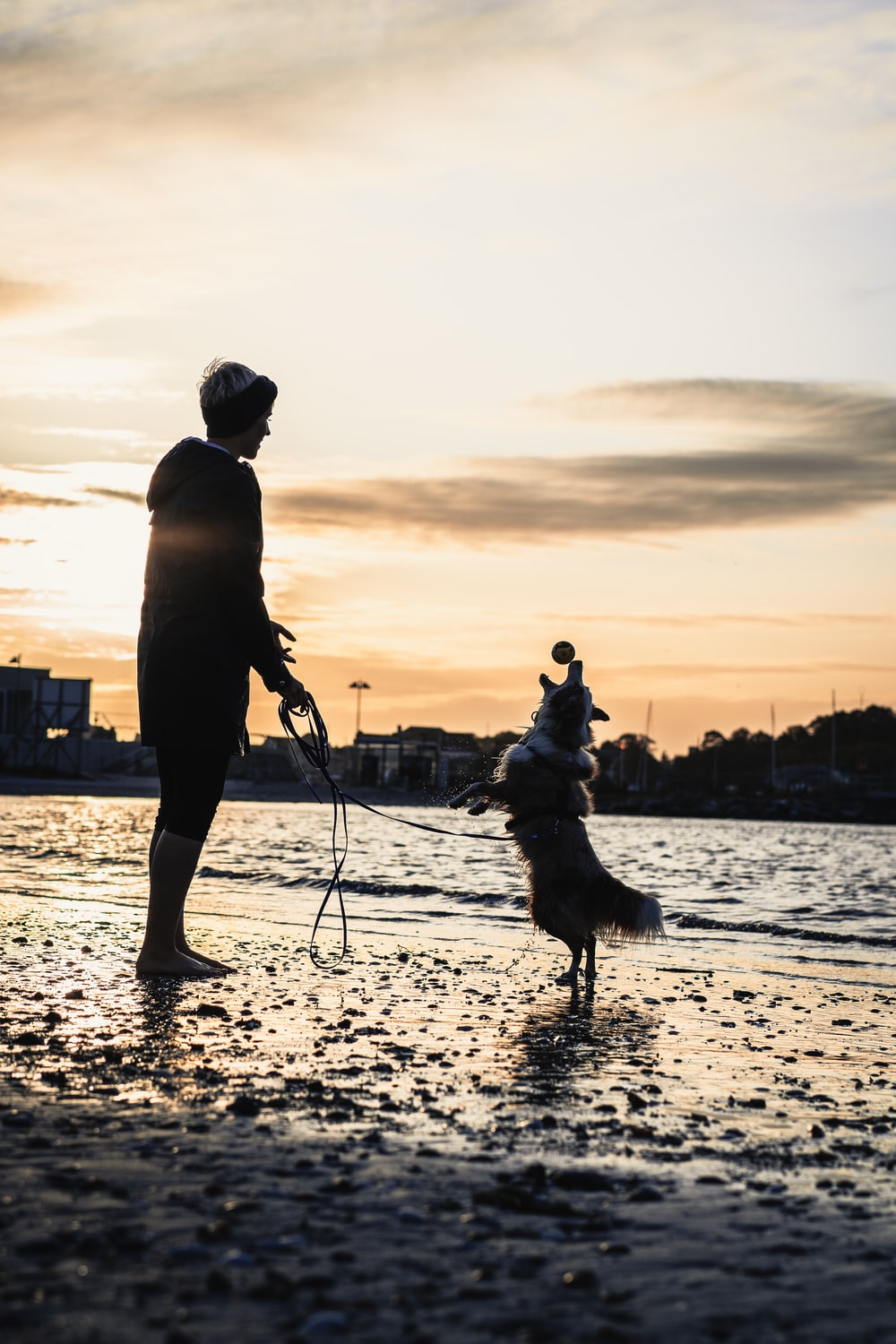 person and dog playing on shore