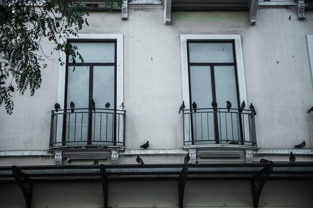 black pigeons on window rail