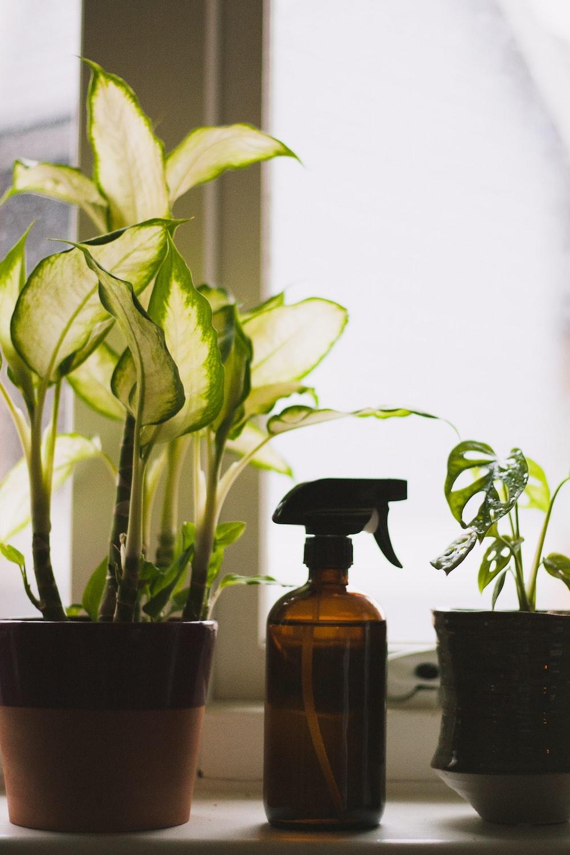 green plants in pots between spray bottle