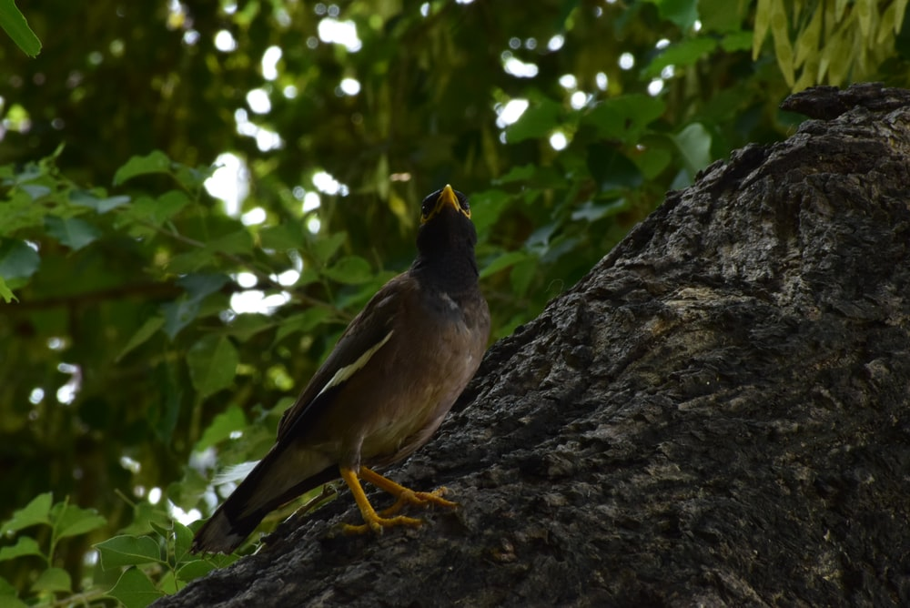 bird on tree branch during day