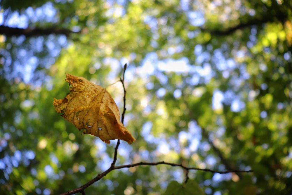 dried leaf on tree