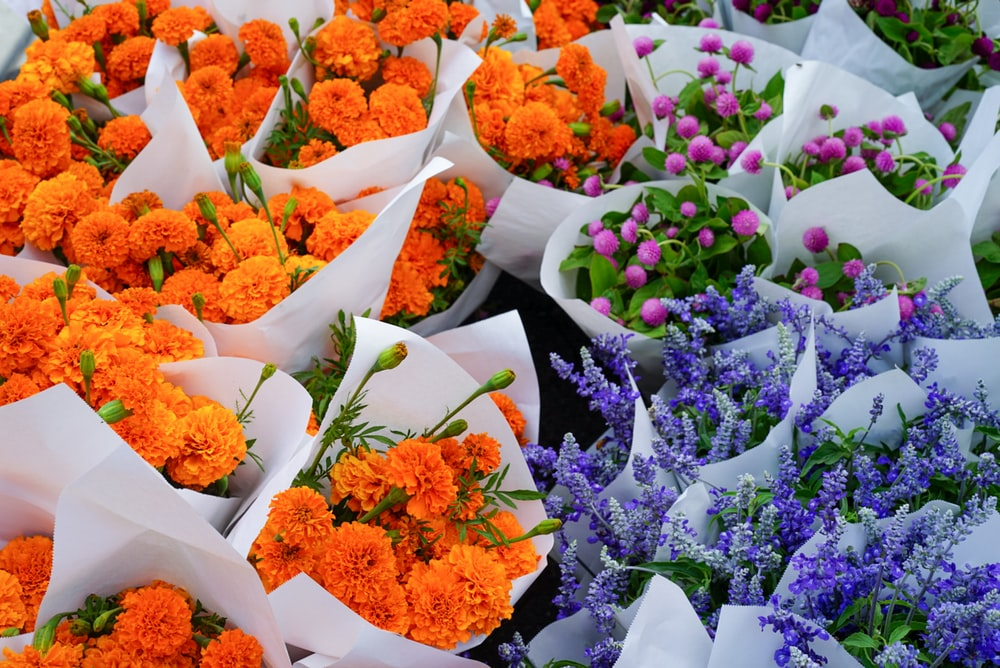 orange and blue petaled flowers