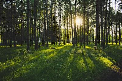 Forest, sun light, nature, green