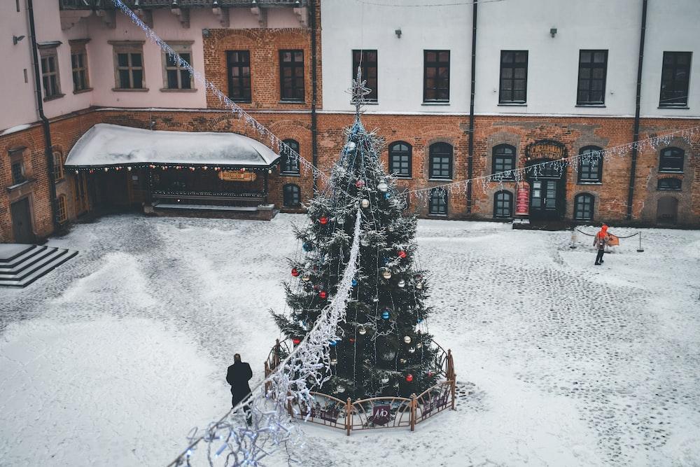 green holiday tree near building