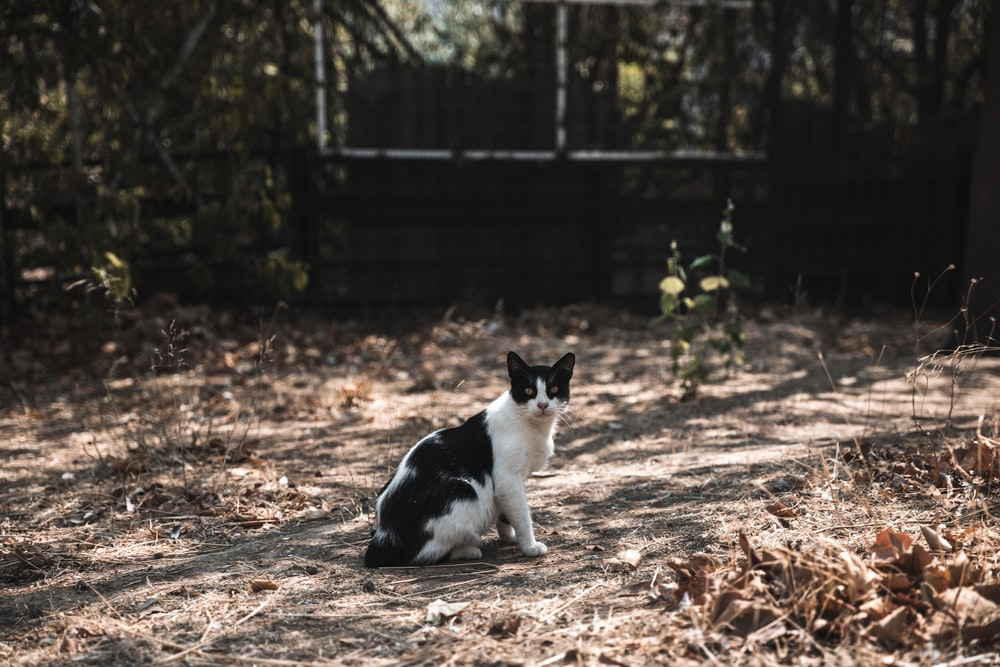 shirt-fur black and white cat on ground
