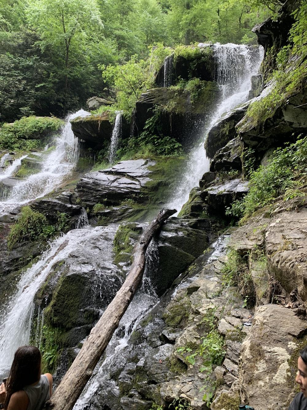 green trees beside waterfalls
