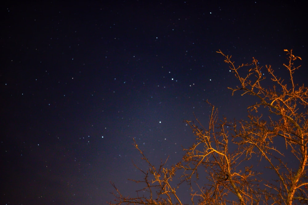 tree across starry sky photo