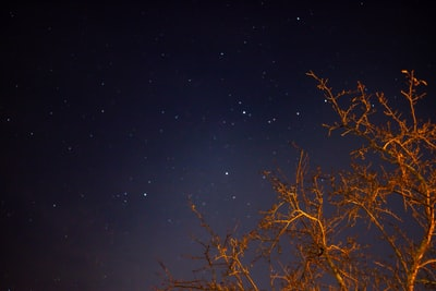 tree across starry sky photo october zoom background