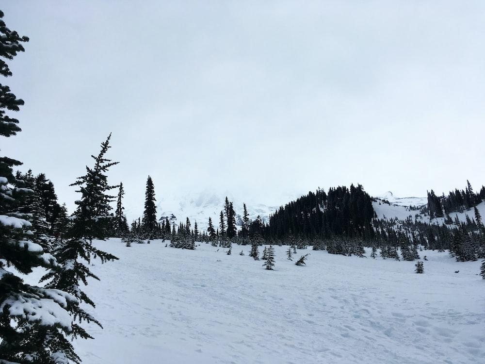 snow field under gray sky]