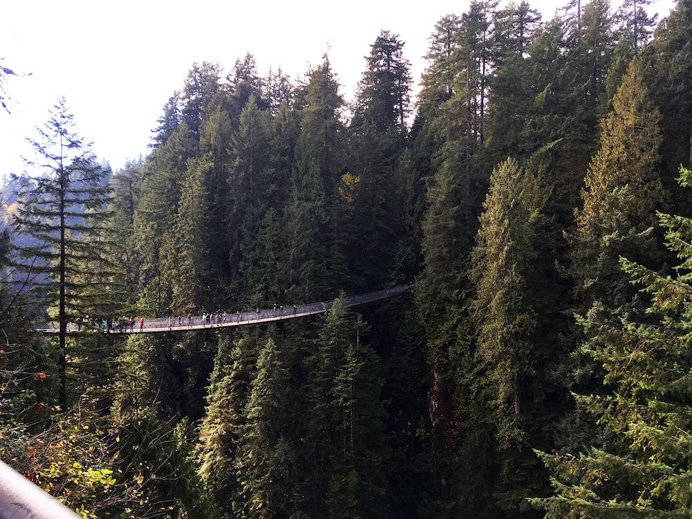 people crossing suspension bridge