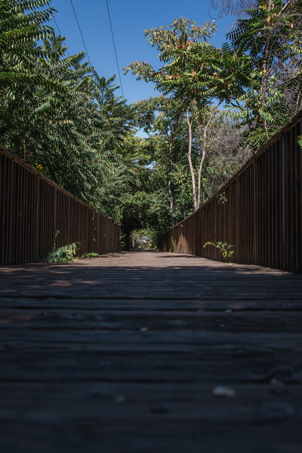brown wooden pathway between green trees