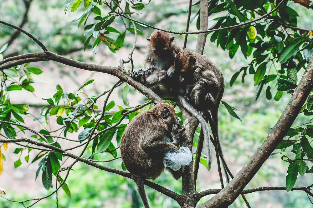 two brown primates on tree