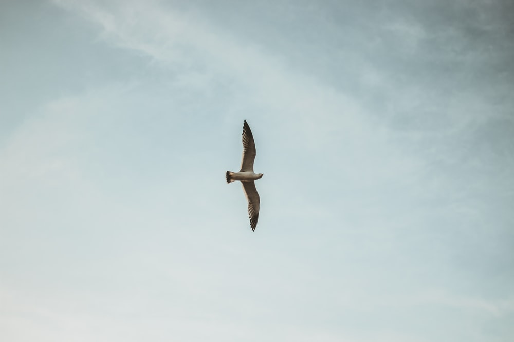 selective focus photography of white bird flying on air during daytime