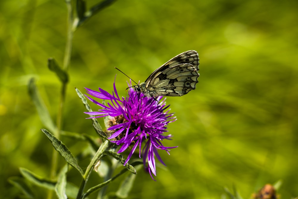 selective focus photography of purple-petaled flower and black and white butterfly during daytime