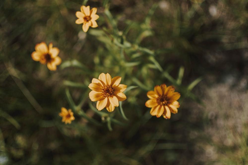 yellow-petaled flowe