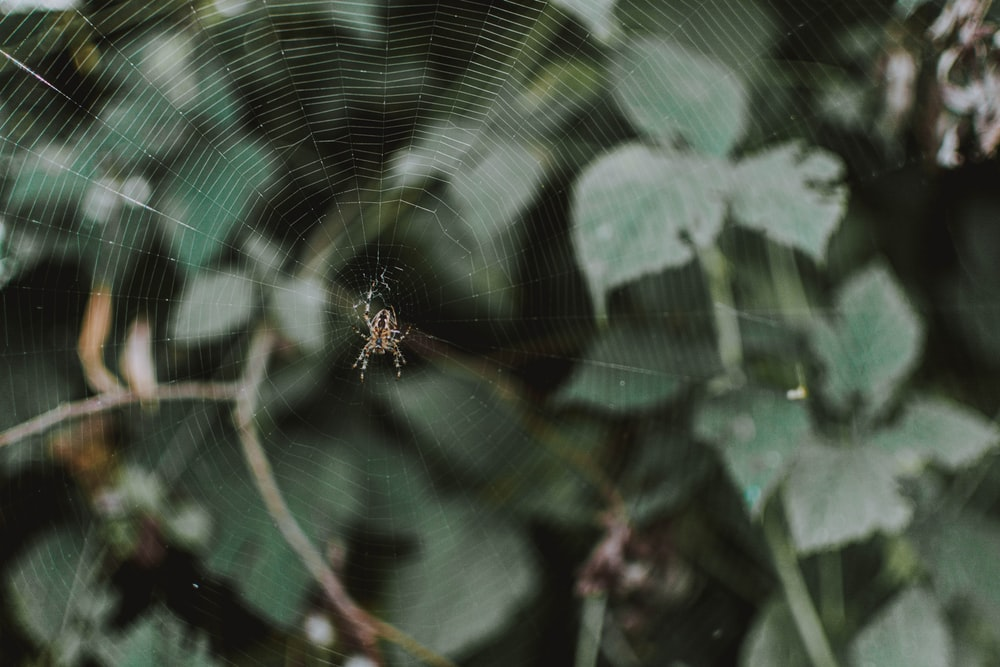 closeup photo of spider on web