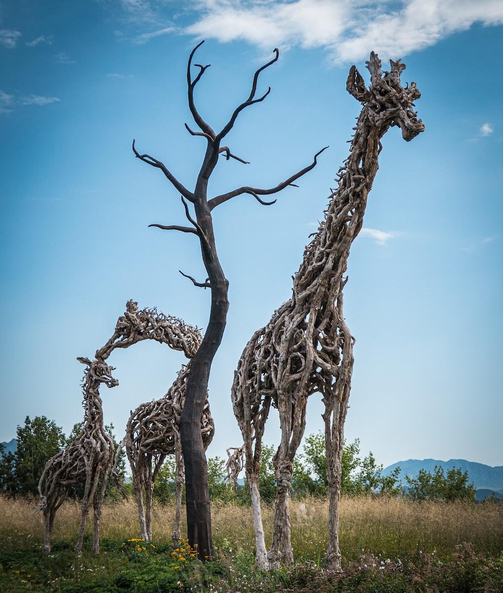 three giraffe tree branches