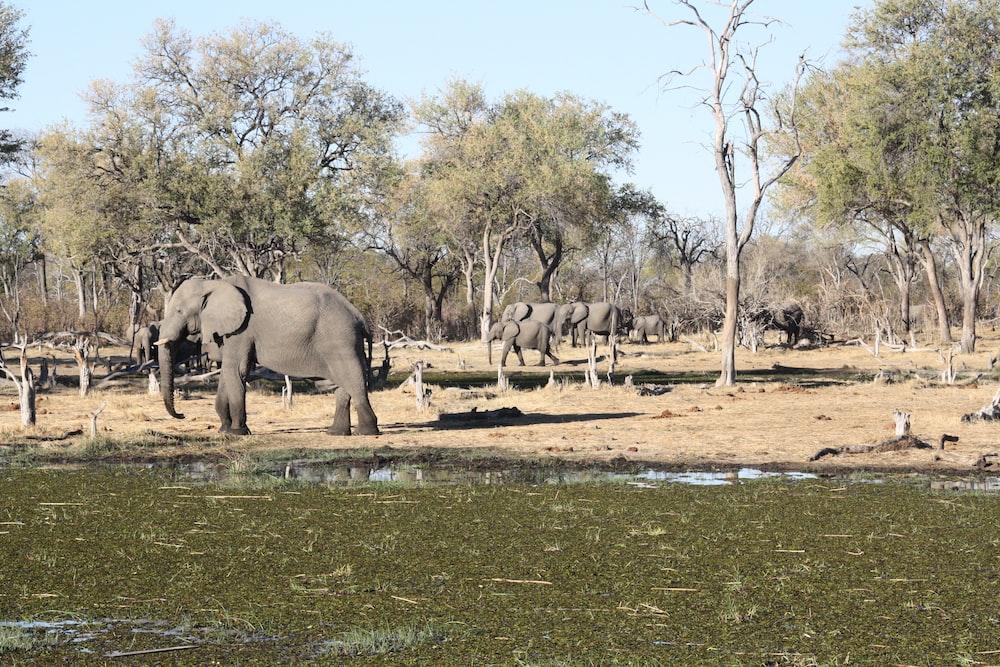 gray elephant on green grass