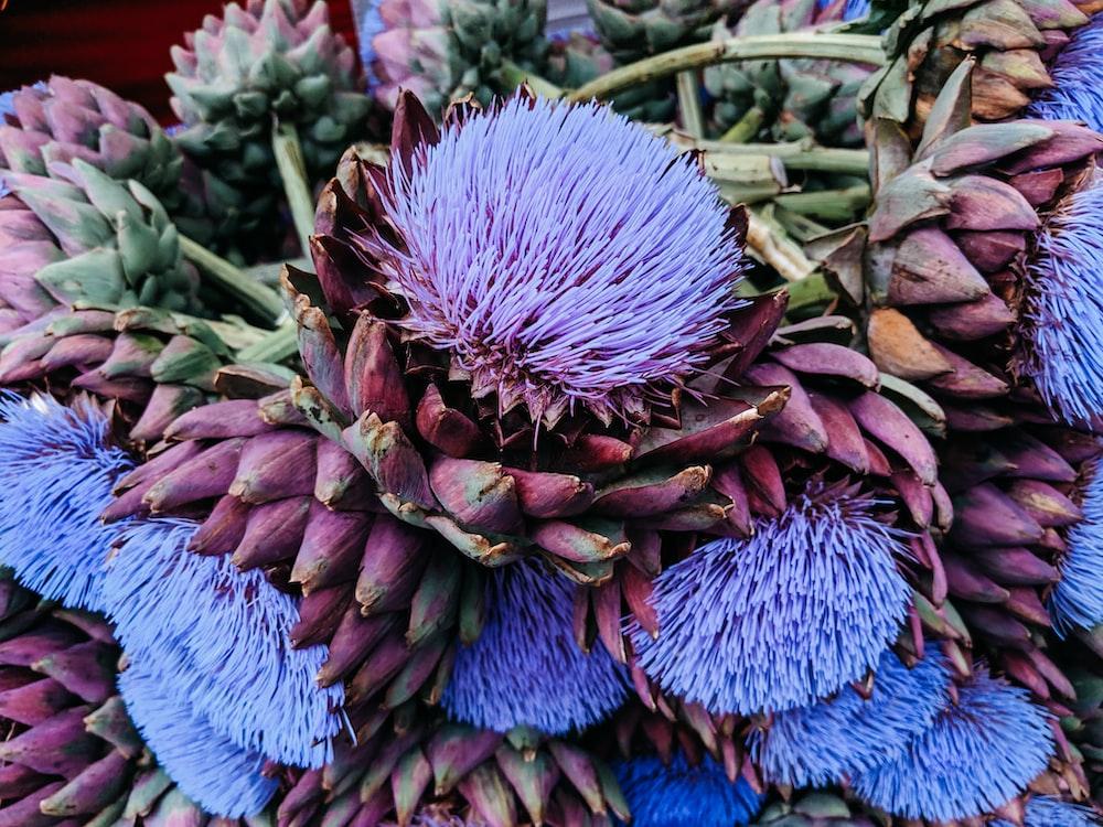 blue-petlaed flower