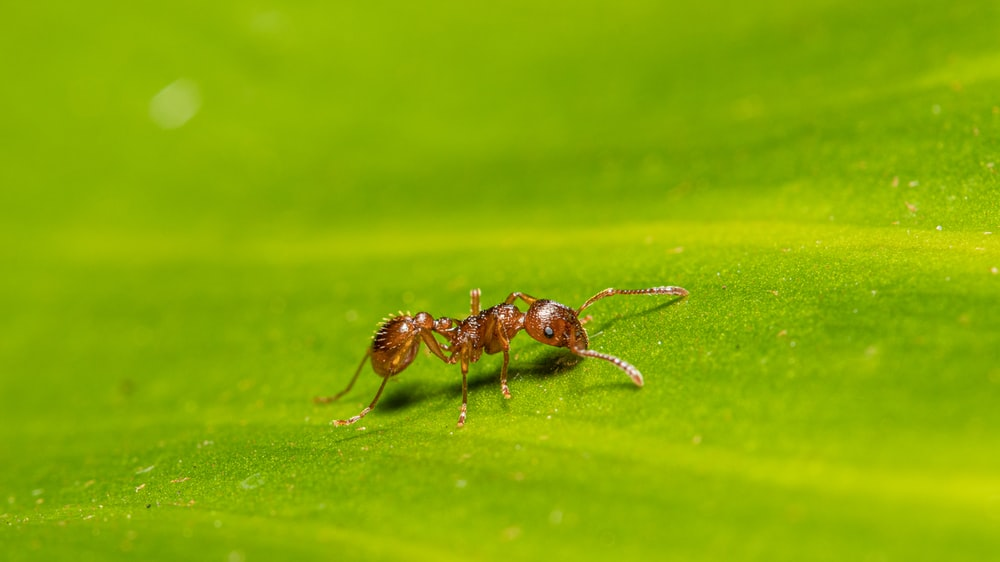 selective-focus photography of ant