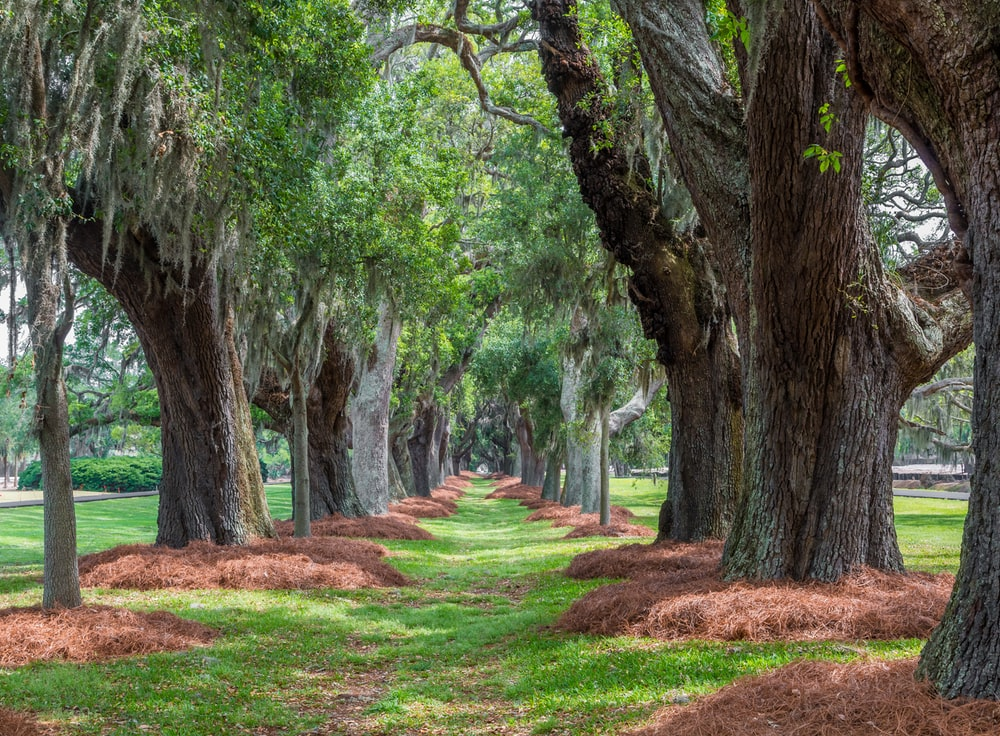 green tree tunnel at daytime